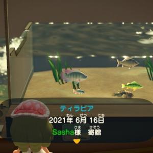 ゲーム「あつまれどうぶつの森_ティラピアを初めて釣り上げたので寄贈したよ」