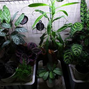 植物「今日の高温多湿コーナー」