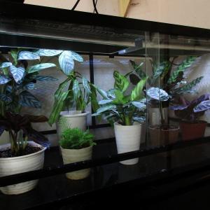 植物「突貫工事」
