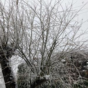 すごい雪降ってきた