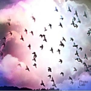 LOVE♡野鳥