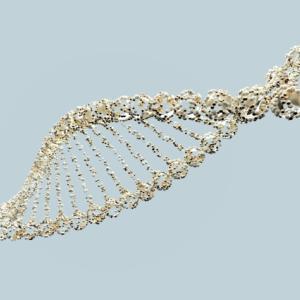 美しい人の遺伝子