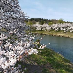 桜を見て思うのは、予期せず変わっていく人生