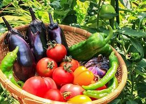 なぜ出始めの食材を食べると75日も寿命が延びる?