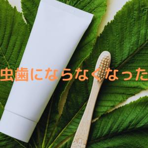 【オススメの一品】虫歯にならなくなった🦷歯磨き粉と歯ブラシ