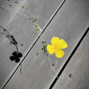 もうすぐ夏だよ! お花だよ!