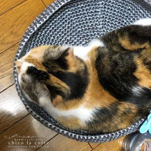 洗濯かごの筈が、猫の収まりが良すぎる…。