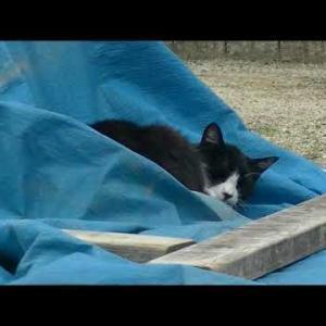 工事現場で寝ちゃう猫