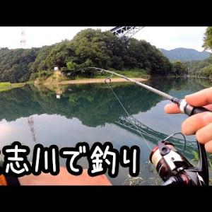 道志川で釣り