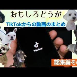 おもしろどうが TikTokに投稿した動画の総集編その1