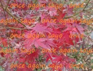 The leaves are changing(紅葉)