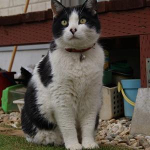 ●今日も、うちの猫はお庭をパトロールですw