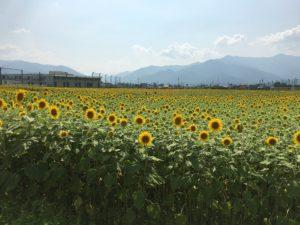 【長野 / 上高地】初夏におすすめ!避暑地の代名詞「上高地」へ!