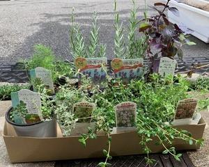 ベジトラグポピーで家庭菜園とハーブ寄せ植えに挑戦