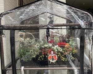 ビニール温室とパネルヒーターで寄せ植えの冬越し対策