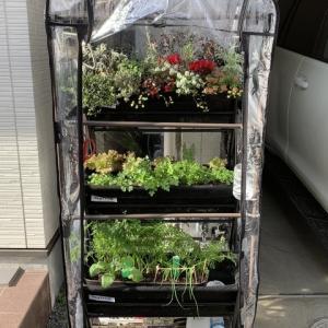 ベジトラグのハーブと冬の寄せ植えの紹介