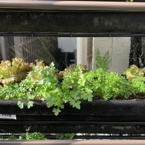 ベジトラグの野菜栽培の様子