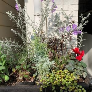 【寄せ植え】リーフプランツの開花