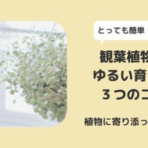 観葉植物のゆるい育て方・3つのコツ
