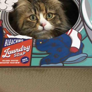 【買物】Awesome store で猫グッズ購入!