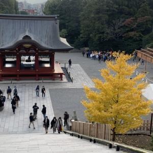 🍁鎌倉八幡宮 紅葉🍁