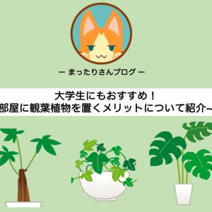 大学生にもおすすめ! ~部屋に観葉植物を置くメリットについて紹介~