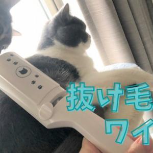 猫グッズについた抜け毛掃除におすすめ! 猫壱・抜け毛取りワイパー【レビュー】