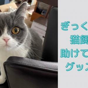 ぎっくり腰の猫飼いを助けてくれたお役立ち猫グッズ3選!