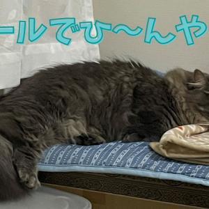 Nクールのお気に入りペットベッドで猫もひんやり快適zzz