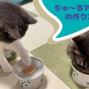 夏におすすめ猫おやつ「ちゅーるアイス」の簡単作り方 水分補給にも!