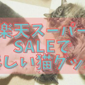 楽天スーパーSALEで買いたい猫グッズ|2021夏