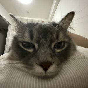 【うちの猫】初夏の寝苦しい夜のはずなのに・・・