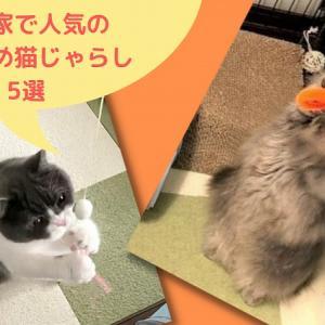 うちの猫に人気の猫じゃらしはこれ!おすすめ5選|2021夏