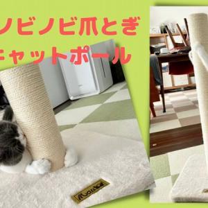 Mau爪とぎキャットポールで、立ったまま猫がノビノビガリガリ!|口コミ