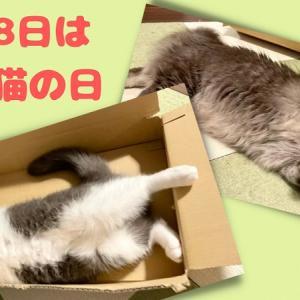 8月8日は「世界猫の日」全猫に幸あれ! International Cat Day