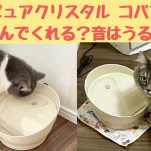 ピュアクリスタル コパン猫用の口コミ|音はうるさい?短足猫でも飲みやすい?