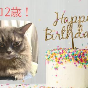 【うちの猫】コロ2歳のハッピーバースデー!!