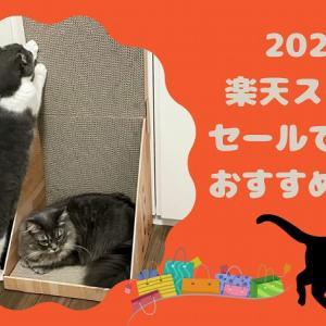 初めての楽天スーパーセールで買ったおすすめ猫用品はコレ!(2021年9月)
