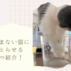 猫が水を飲まない!?うちの猫に水分とらせるための対策5つ紹介!