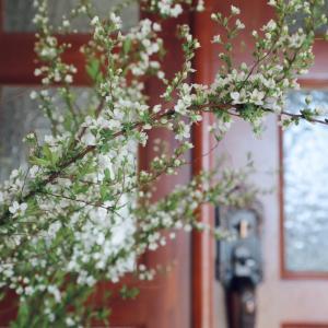 庭の花・雑草を飾って幸せな空間づくり