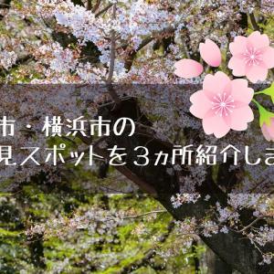 【開催実績あり】川崎市・横浜市のお花見スポットを3か所紹介します!