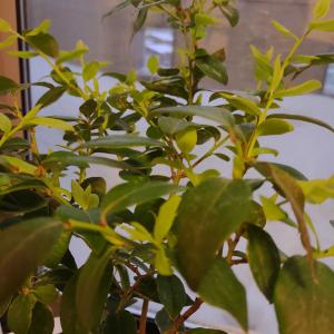 1月のブルーベリー栽培