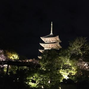 カニ&カメ姉妹が行く♪ Part⑤〜夜桜を観に東寺へ〜