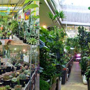 東京にあるオシャレな観葉植物のお店【おすすめ5店舗】