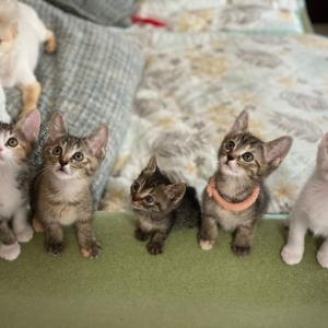 里親さん決まりました!【名古屋市愛護センター保護猫預かりボランティア】