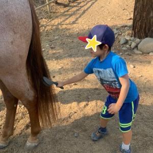 乗馬のサマーキャンプ