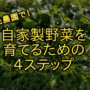 【家庭菜園】市民農園を借りて野菜の栽培を始めるための4ステップ