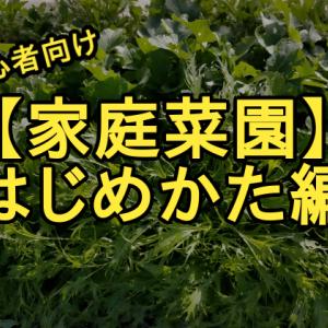 【初めての家庭菜園】野菜作りを始める前に知っておきたい3つの知識