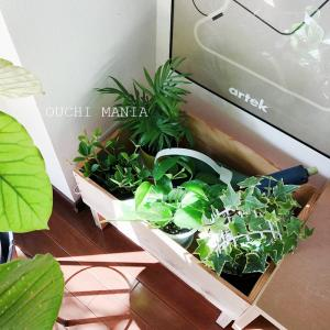 通販で購入した観葉植物をリビングに、グリーンのある暮らし