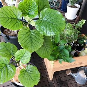 忙しくても大丈夫、観葉植物を枯らさず育てるコツ